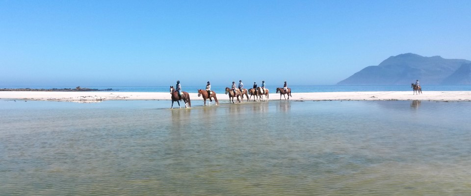 Activities to do with kids in Cape Town - Beach horse riding